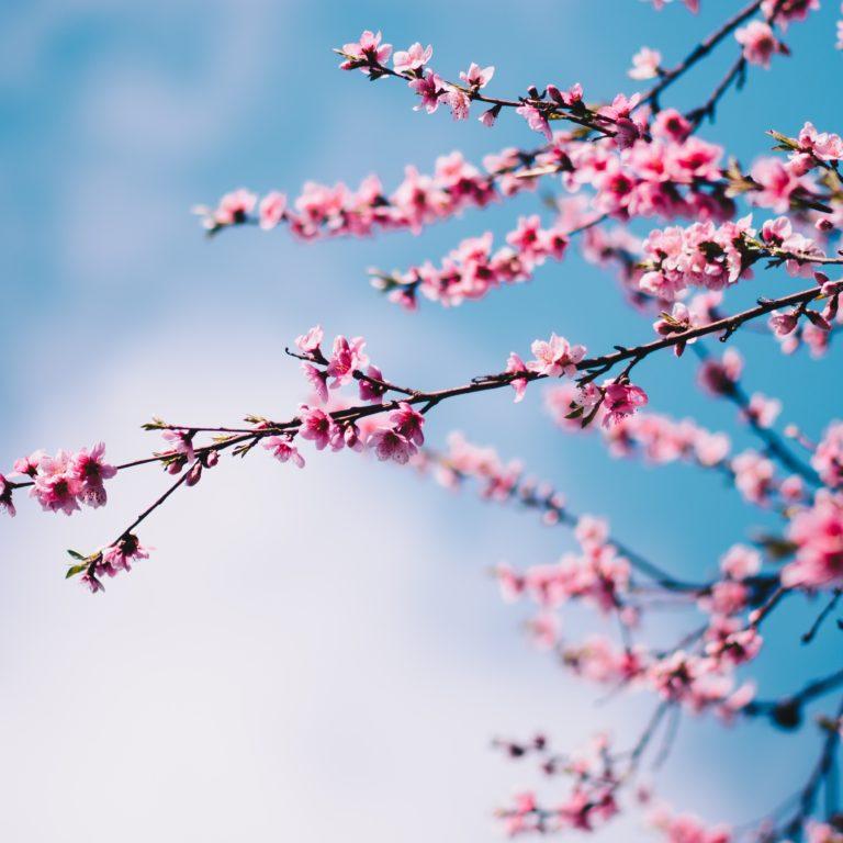 séminaire de printemps featured image